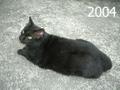 2004cimg5590_2