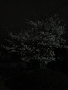 75img_2049
